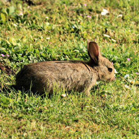 rabbit background.