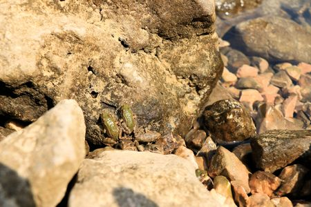 baby Frogs Stock Photo