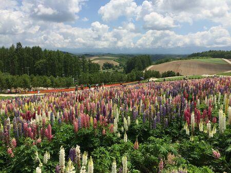 flower fields: Beautiful flower fields Stock Photo