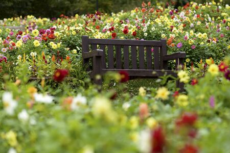 wood agricultural: Wooden bench in flower garden Stock Photo