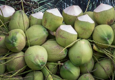 coco: El manojo de coco jugo fresco de la naturaleza Foto de archivo