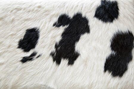 cow skin: cow skin fur