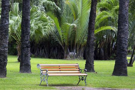 palm garden: wooden bench in palm garden
