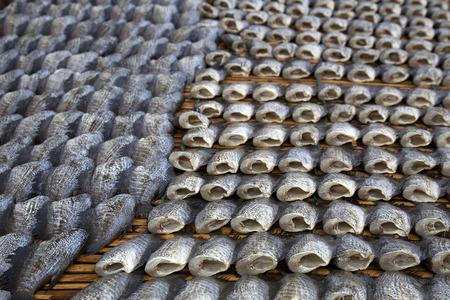 pla: Shallow of depth to Snake Skin Gourami Fish,Pla Salit Trichogaster pectoralis desiccated.