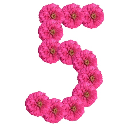 Flowers arranged into the shape of the number 5 on a pure white background.  photo