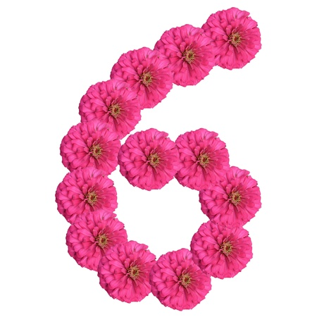 Flowers arranged into the shape of the number 6 on a pure white background.  Stock Photo - 10393778