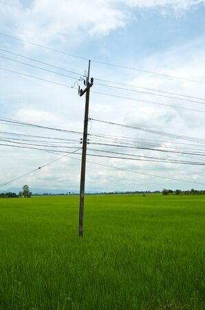 Electrical poles and green rice photo