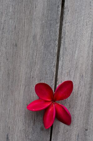 pink flower on wood  Stock Photo - 10534430