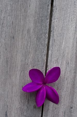 Purple flower on wood