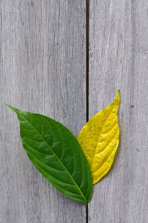 green and yellow leaf on wood wall Stock Photo - 11051083