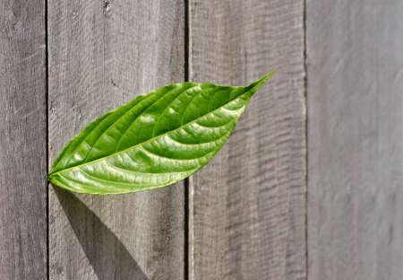 green leaf on wood wall Stock Photo - 11051062