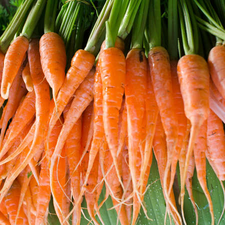 Bunch orange carrots with green leaves photo