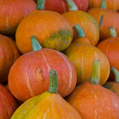 Colorful pumpkins collection on the market photo
