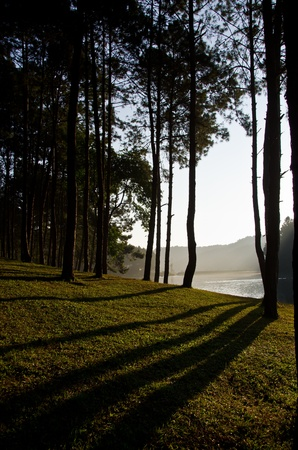 Sun rise at Pang-Oung, Pine forest in Thailand.
