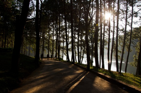 Sun rise at Pang-Oung, Pine forest in Thailand. photo