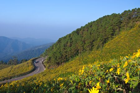 Mexican sunflower mountain in Maehongson, Thailand