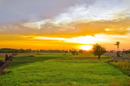 The sun was up. Among the rice fields. Stock Photo - 18280756