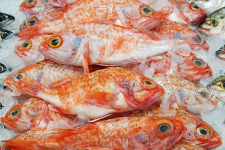 Image of Bigeye ocean perch on display at supermarket. Fresh whole bigeye ocean perch in selective focus with fish scale.