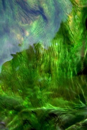 algen: Groene algen in warm water bij Park Nation Jea Sorn, van het land Thailand