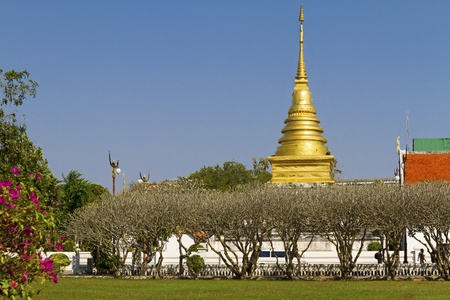 Dry tree outdoor pagoda Wat Phra That Chang Kham, Nan,Thailand  photo