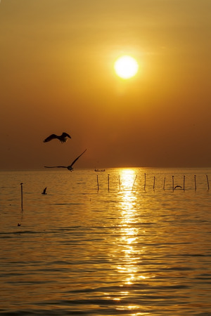 pu: The seagull with sunset at Bang Pu Seaside of Thailand Stock Photo