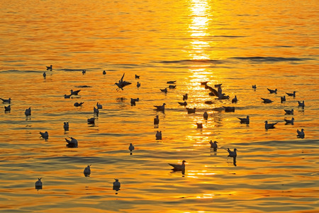 pu: The seagull play with sunset at Bang Pu Seaside of Thailand