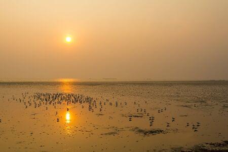 pu: Sunset beautiful and silhouette seagull at Bang Pu Seaside of Thailand