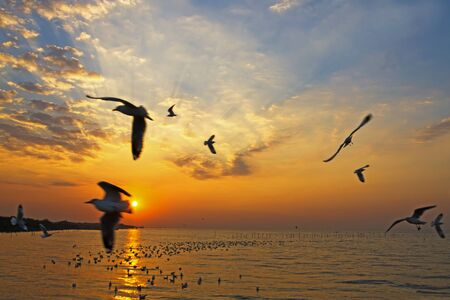 pu: Sunrise morning seagull action on beach at Bang Pu Seaside of Thailand