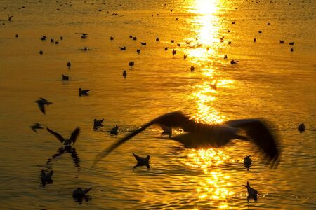 pu: golden sunset with seagull play on water at Bang Pu Seaside of Thailand