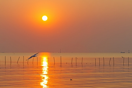 ply: Sunset water golden seagull ply at Bang Pu Seaside of Thailand Stock Photo