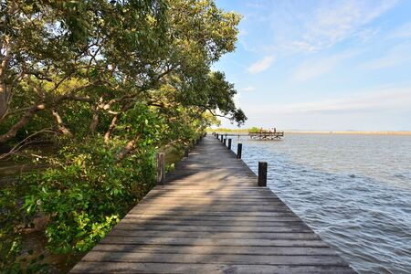 Boardwalk for sightseeing mangrove forest by the seaside in Rayong,Thailand