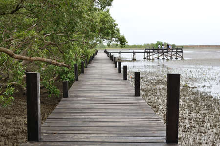 The boardwalk for travel to sightseeing of mangrove forest in Rayong,Thailand