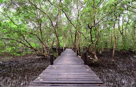 Boardwalk and mangrove forest