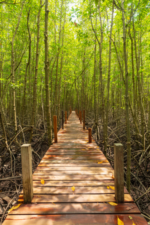 BoardWalk into mangrove forest at Tung Prong Thong