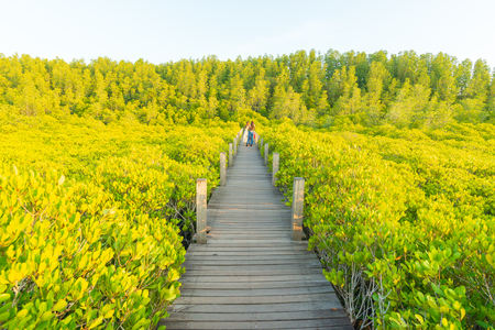 Rayong,Thailand - April 12 People of Rayong and people in the neighboring provinces have come to visit the beauty of mangrove nature at Tung Prong Thong on the April 12,2018 in Rayong,Thailand
