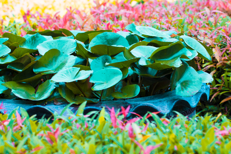 fantasy leaf lotus and leaf spike flower in sping sumer after raining in the morning, technical cost-up.