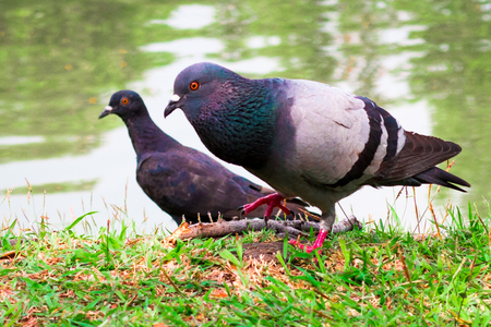 Dove in Day of Peace ,World Peace Day, technical cost-up. Stock Photo