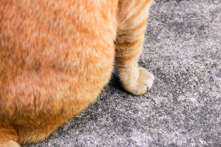 Street cat isolate on background,front view from the top, technical cost-up. 写真素材