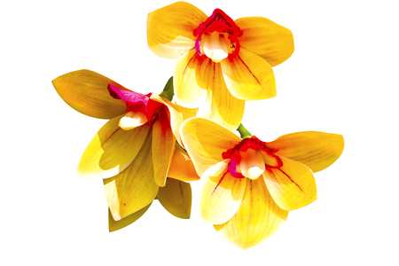 Orchid to creative for design and decoration isolate on background.Copy space.Clipping path