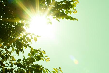 Sun shining through the trees, Fair lens Vintage style.