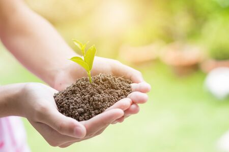 forestation: Soil cultivated earth, ground, agriculture Field land background, Organic gardening, agriculture. Hand holding seedling in new life concept. Stock Photo