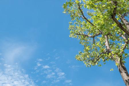 Sun, der durch Baum mit blauem Himmel scheint. Standard-Bild - 80013004