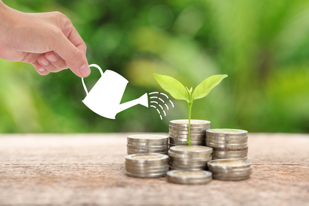 Money and plant with woman hand  hold watering can and tree, Saving money concept.
