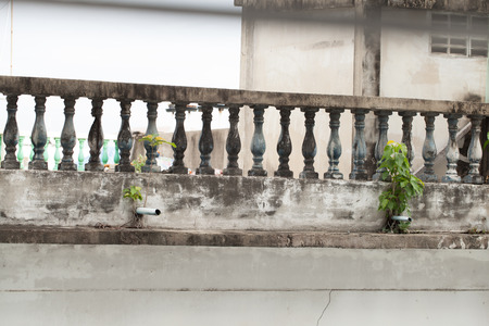 Plants growing on abandoned buildings Banco de Imagens