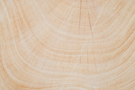 Close Up texture of tree circumference trunk after being cut.