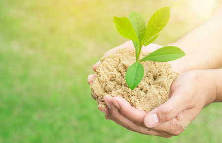 plant grows on soil and hands of men. Stock Photo