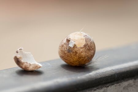 Bird eggs stolen from something. Came to the gate, Natural background Imagens
