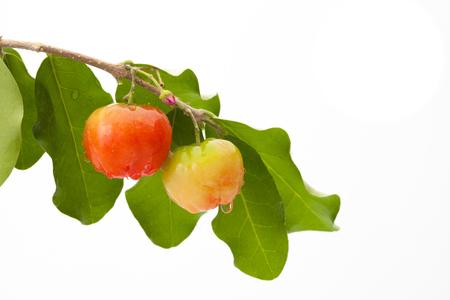 Acerola cherry of thailand, White background, Select focus, Barbados cherry Stock Photo