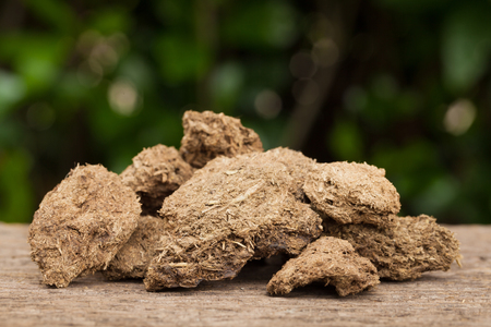 Close up dried cow dung on a wood,  Natural background Stock Photo