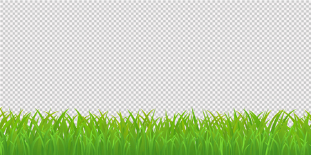 Green Grass Border, Isolated on Transparent Background. Vector Illustration